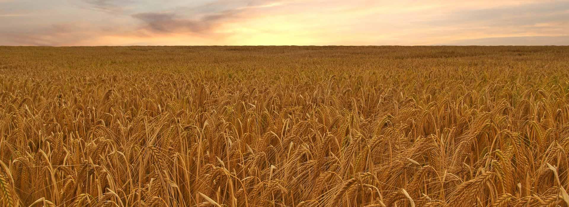 homeslide_01_wheat